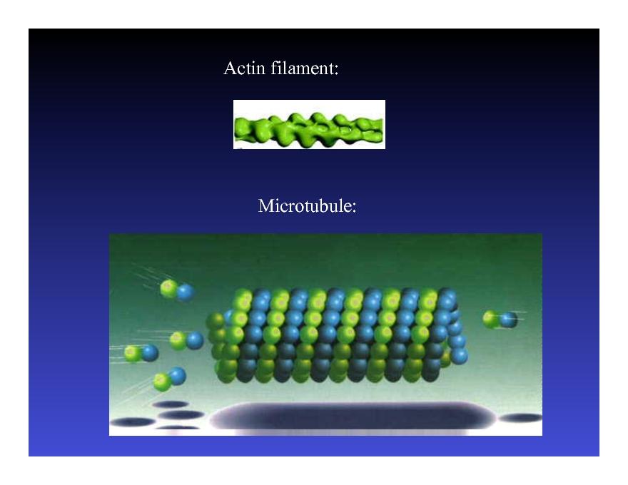 Mathematical models in biology leah edelstein-keshet