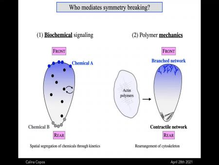 Cell symmetry breaking for movement through a mechanochemical mechanism